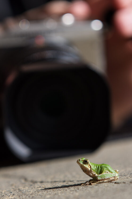 animal, frog, natural, nature